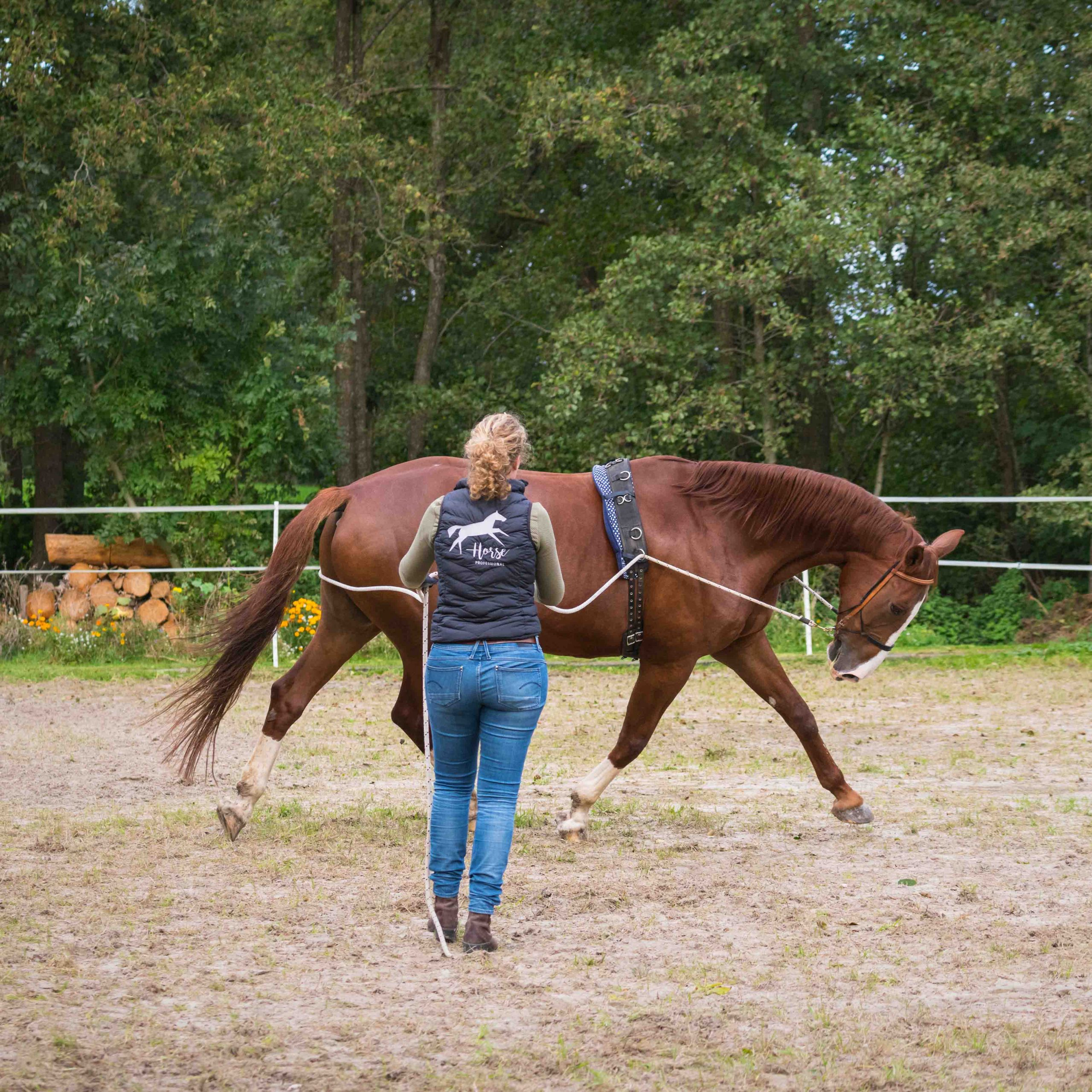 HorseProfessional-Dubbele lange lijnen