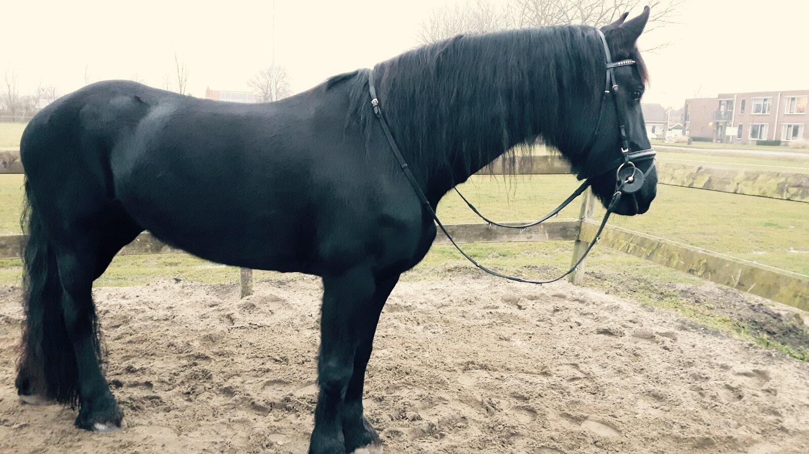 Donna1   welzijnsadvies   HorseProfessional