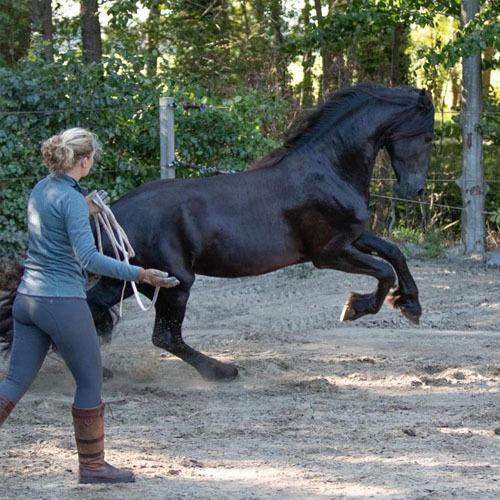 HorseProfessional-Loswerken-doelenhalen-freestyle-training-revalidatie